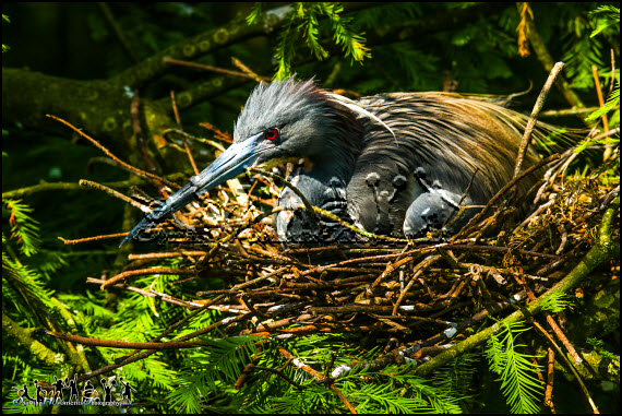 Just nesting photos 6 l